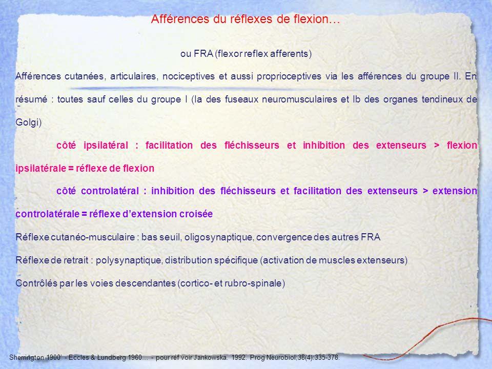 Afférences du réflexes de flexion… ou FRA (flexor reflex afferents) Afférences cutanées, articulaires, nociceptives et aussi proprioceptives via les a