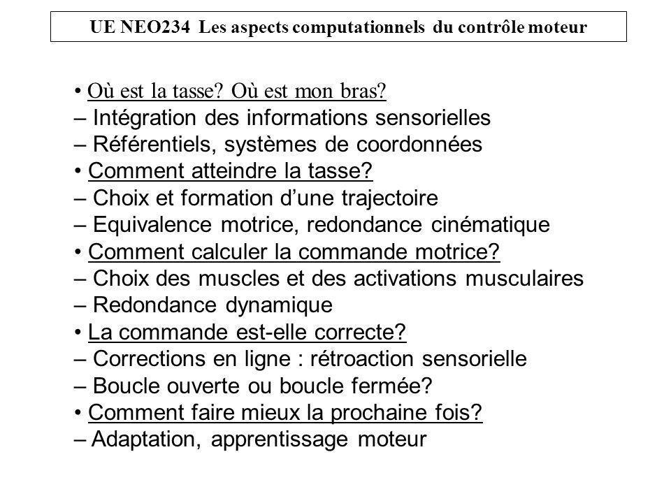 UE NEO234 Les aspects computationnels du contrôle moteur Où est la tasse.