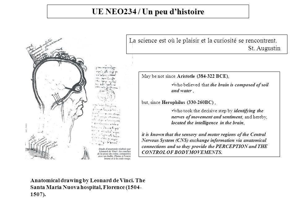 / Un peu d'histoire UE NEO234 / Un peu d'histoire Anatomical drawing by Leonard de Vinci.