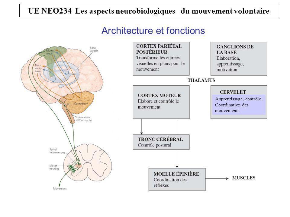 UE NEO234 Les aspects neurobiologiques du mouvement volontaire Architecture et fonctions Apprentissage, contrôle, Coordination des mouvements