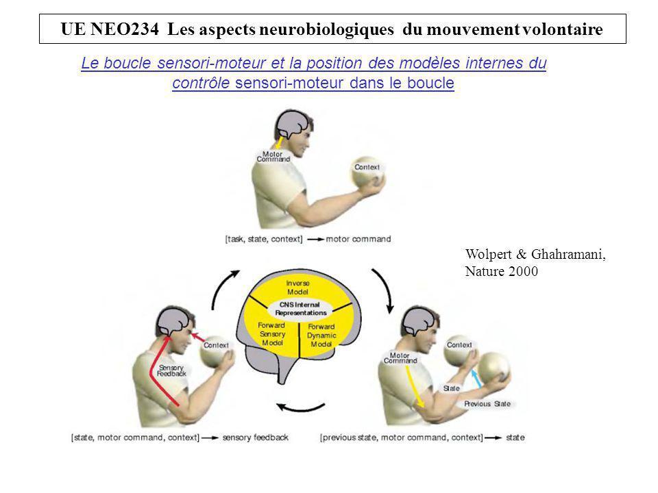 Le boucle sensori-moteur et la position des modèles internes du contrôle sensori-moteur dans le boucle Wolpert & Ghahramani, Nature 2000 UE NEO234 Les aspects neurobiologiques du mouvement volontaire
