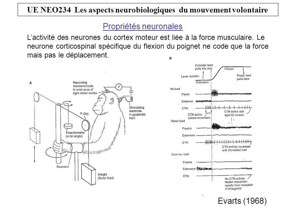 UE NEO234 Les aspects neurobiologiques du mouvement volontaire L'activité des neurones du cortex moteur dépend de la tâche.