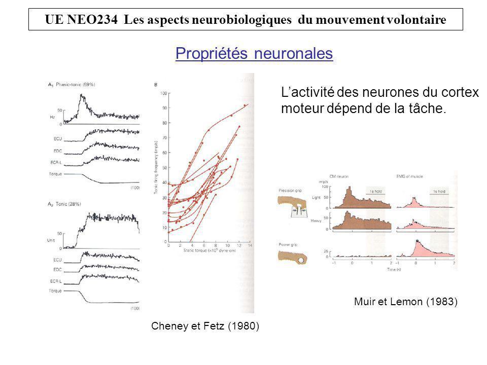 L'activité des neurones du cortex moteur dépend de la direction du mouvement.