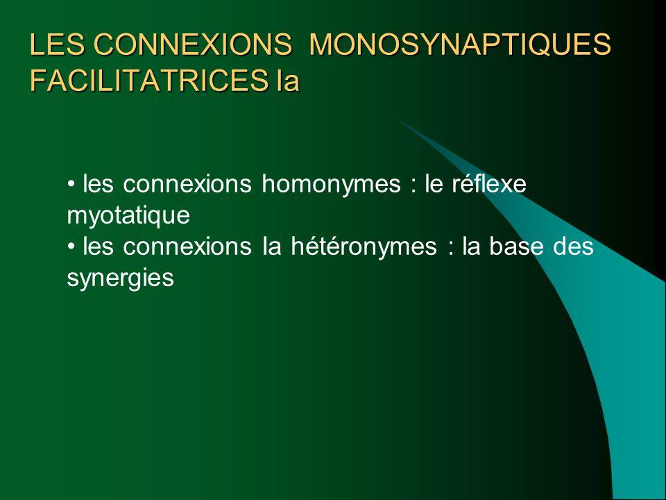 LES CONNEXIONS MONOSYNAPTIQUES FACILITATRICES Ia les connexions homonymes : le réflexe myotatique les connexions Ia hétéronymes : la base des synergie