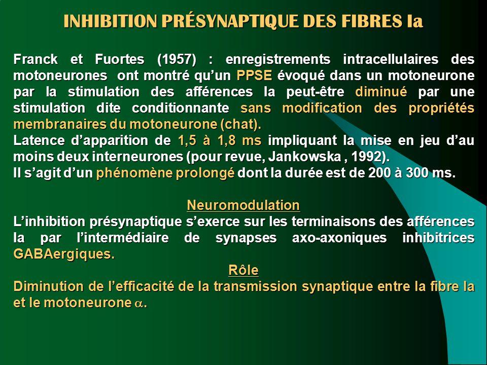 INHIBITION PRÉSYNAPTIQUE DES FIBRES Ia Franck et Fuortes (1957) : enregistrements intracellulaires des motoneurones ont montré qu'un PPSE évoqué dans