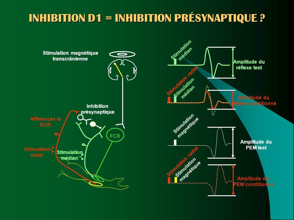 Inhibition présynaptique Afférences Ia ECR FCR Stimulation radial Stimulation médian Stimulation magnétique transcrânienne Stimulation médian Amplitud