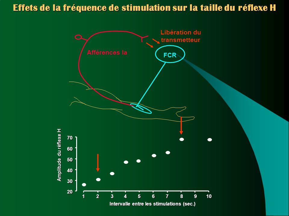 Libération du transmetteur12345678910 20 30 40 50 60 70 Intervalle entre les stimulations (sec.) Amplitude du réflexe H FCR Afférences Ia Effets de la