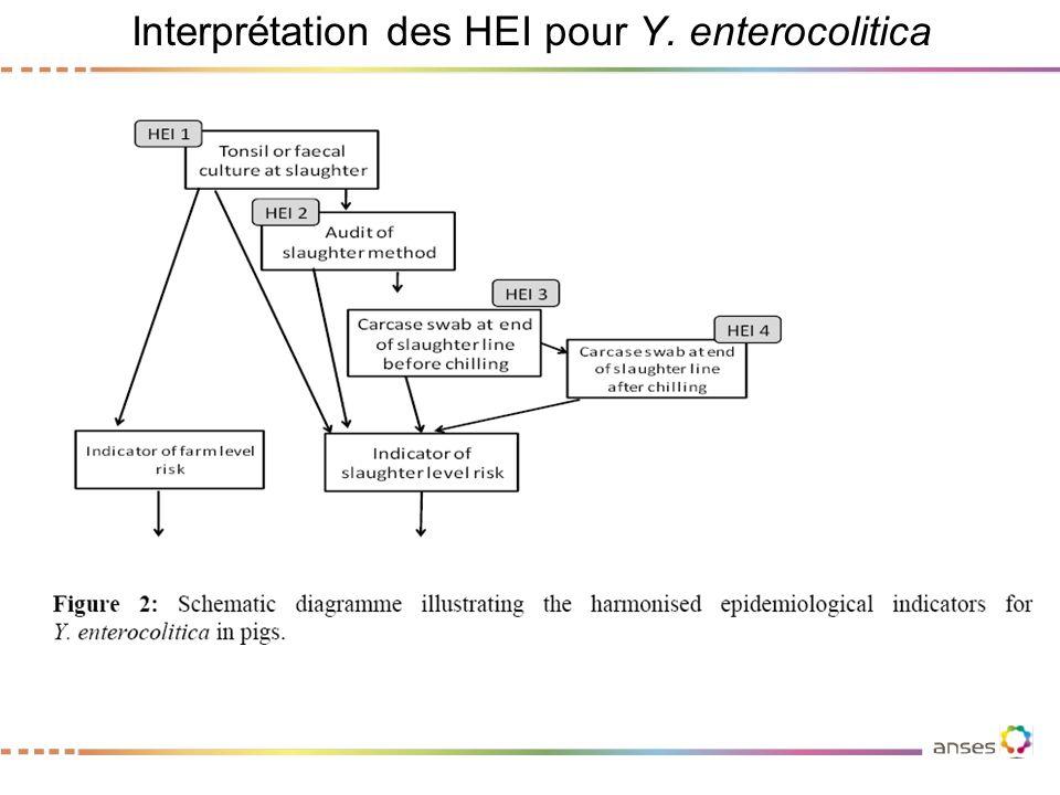 Interprétation des HEI pour Y. enterocolitica