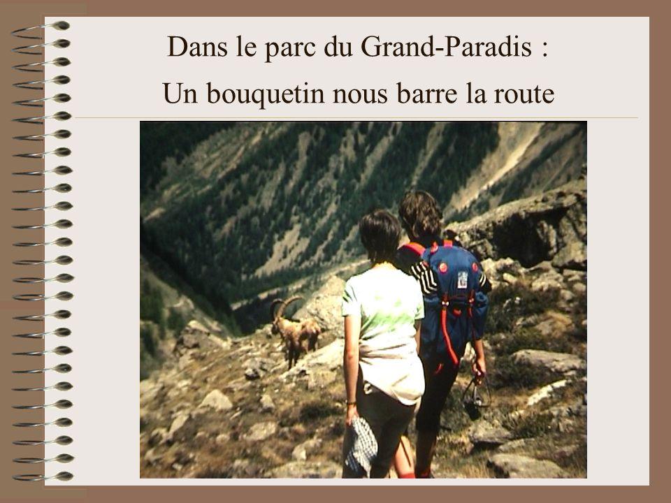 Dans le parc du Grand-Paradis : Un bouquetin nous barre la route