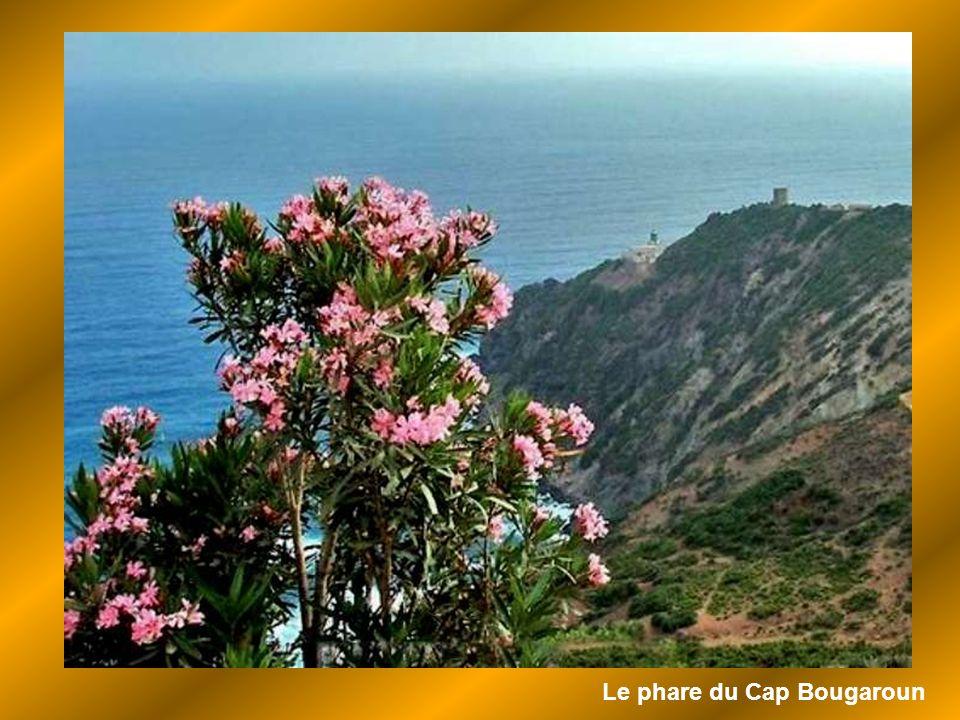 Le cap Bougaroun- Philippeville-