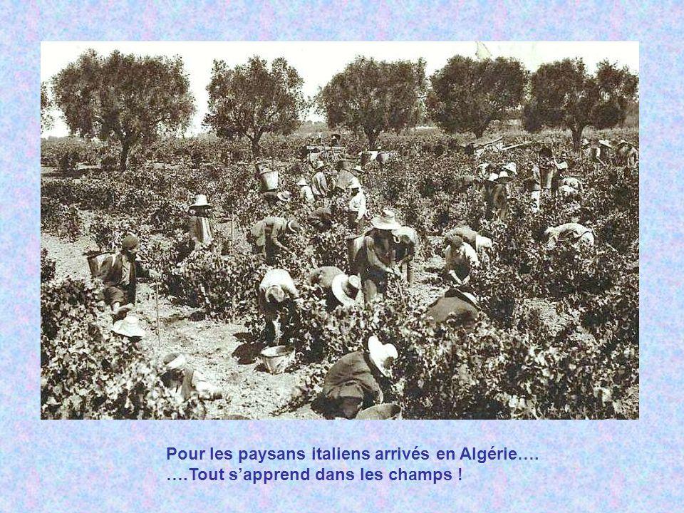 Cueillette du raisin