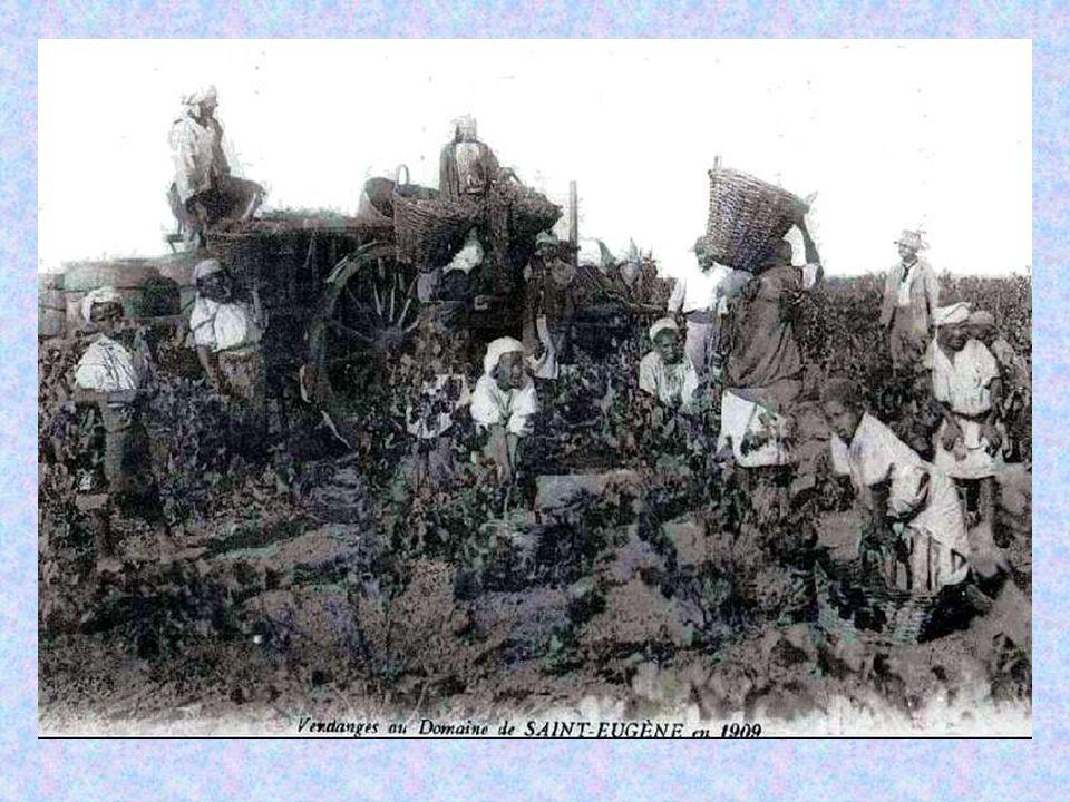 Pour les paysans italiens arrivés en Algérie…. ….Tout s'apprend dans les champs !