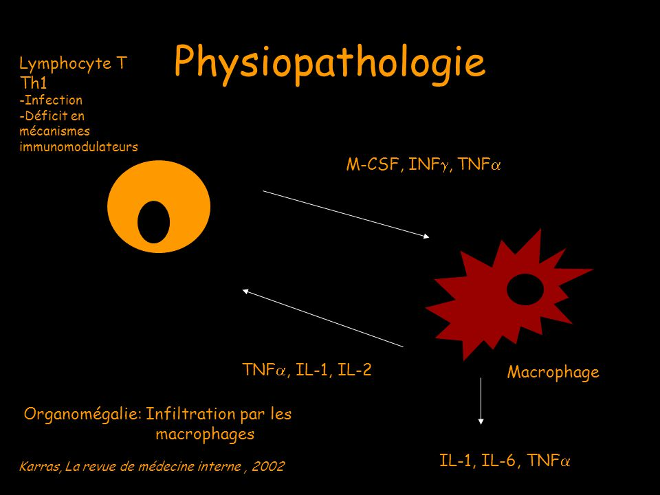 Physiopathologie Lymphocyte T Th1 -Infection -Déficit en mécanismes immunomodulateurs M-CSF, INF , TNF  Macrophage TNF , IL-1, IL-2 IL-1, IL-6, TNF