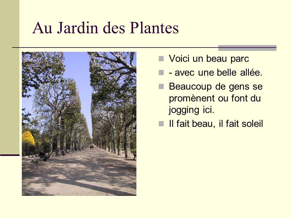 Au Jardin des Plantes Voici un beau parc - avec une belle allée. Beaucoup de gens se promènent ou font du jogging ici. Il fait beau, il fait soleil