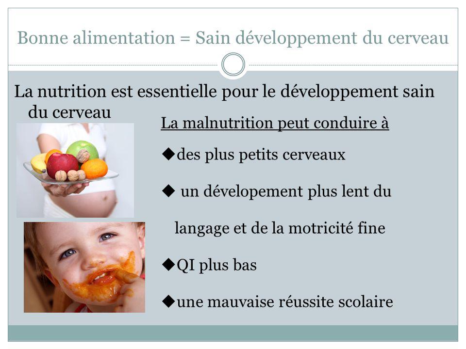Bonne alimentation = Sain développement du cerveau La nutrition est essentielle pour le développement sain du cerveau La malnutrition peut conduire à  des plus petits cerveaux  un dévelopement plus lent du langage et de la motricité fine  QI plus bas  une mauvaise réussite scolaire
