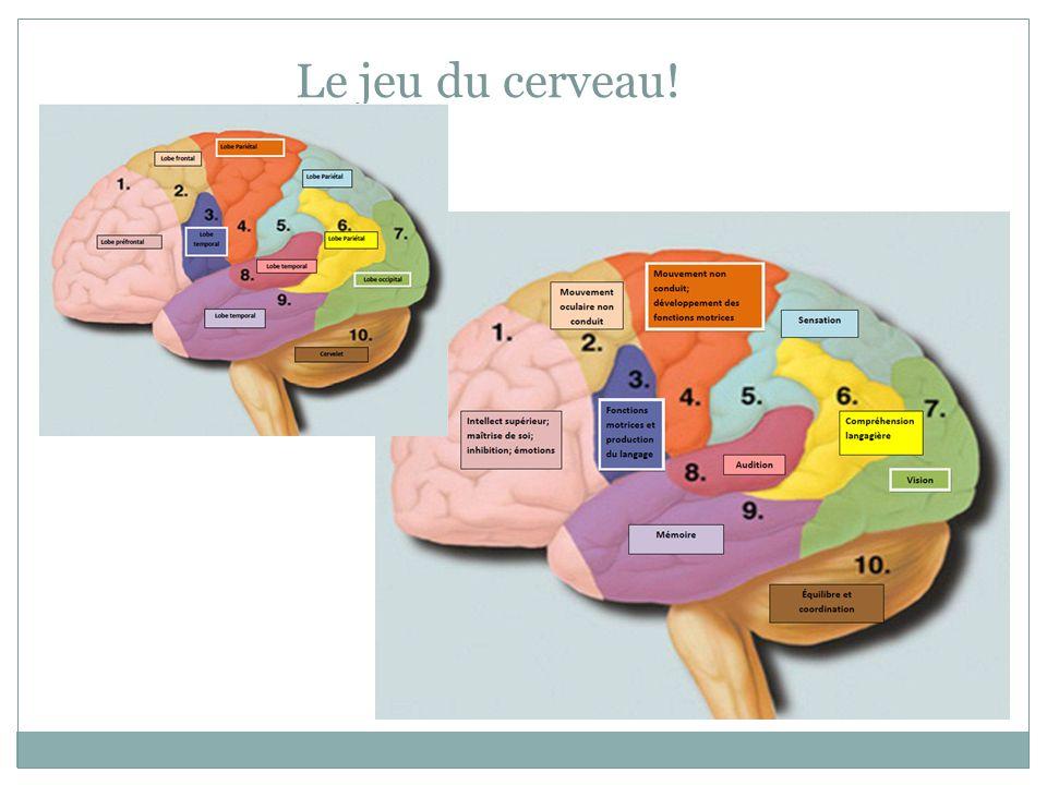 Le jeu du cerveau!
