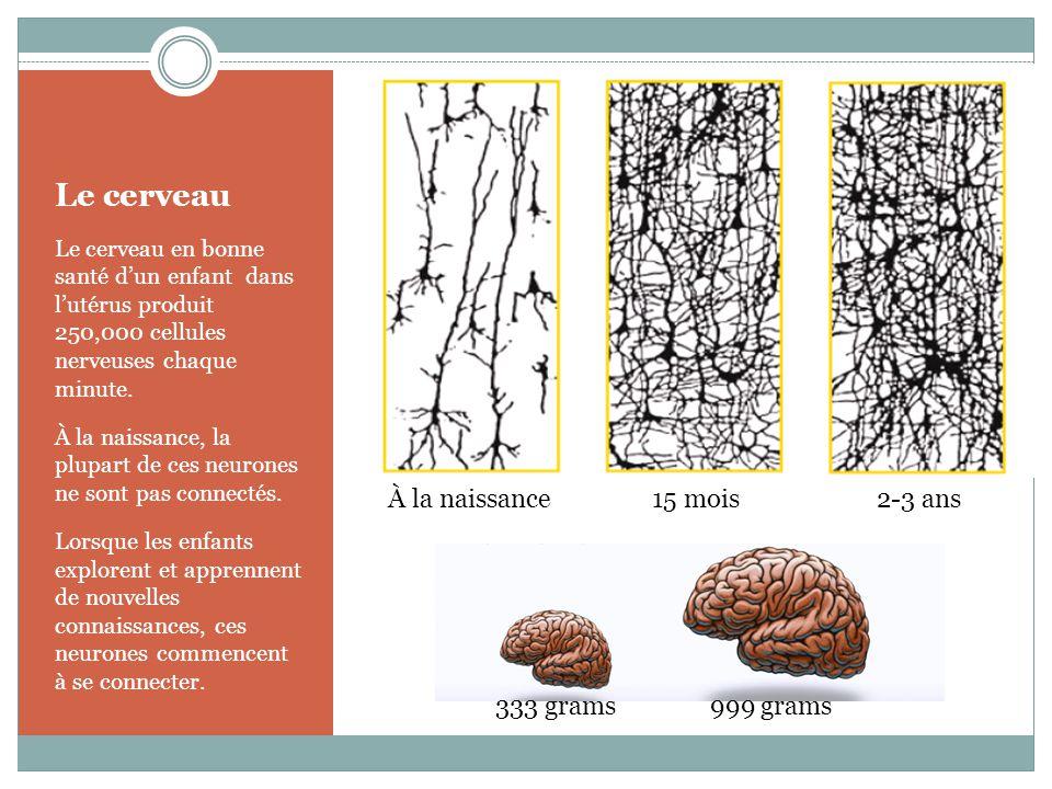 Le cerveau Le cerveau en bonne santé d'un enfant dans l'utérus produit 250,000 cellules nerveuses chaque minute.