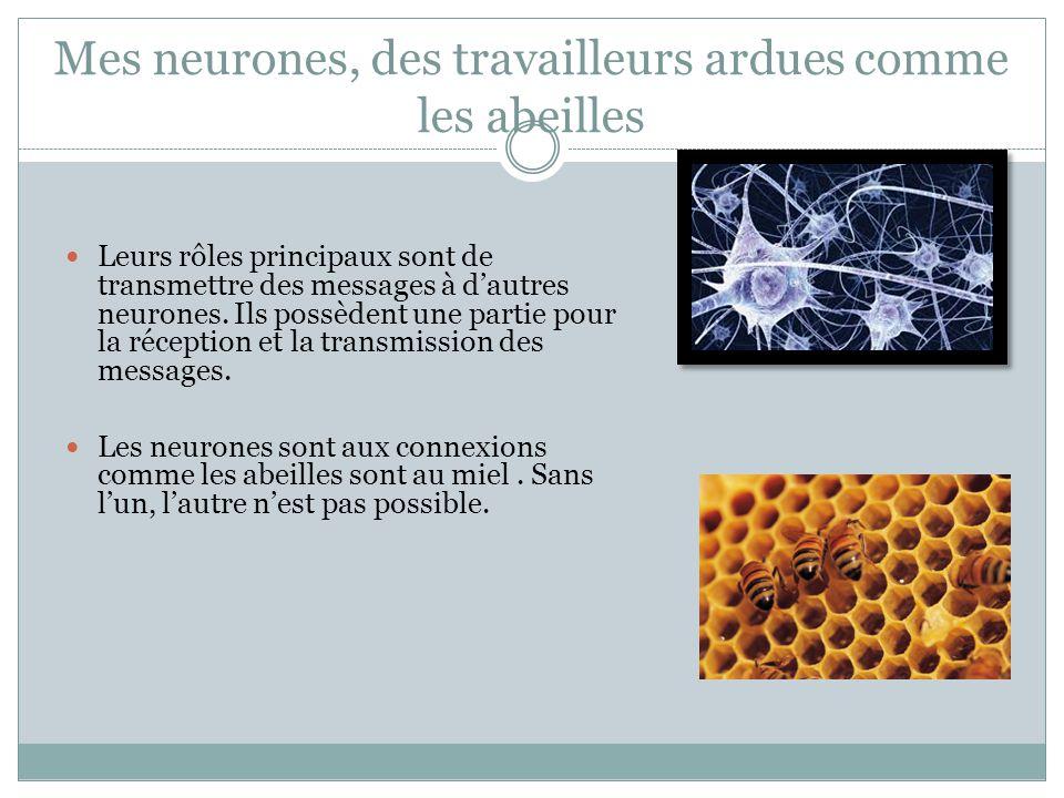 Mes neurones, des travailleurs ardues comme les abeilles Leurs rôles principaux sont de transmettre des messages à d'autres neurones.