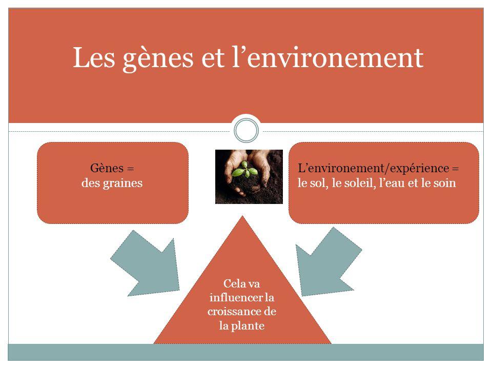 Les gènes et l'environement Gènes = des graines L'environement/expérience = le sol, le soleil, l'eau et le soin Cela va influencer la croissance de la plante