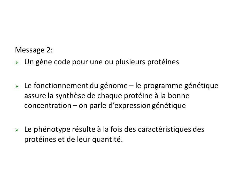 Message 2:  Un gène code pour une ou plusieurs protéines  Le fonctionnement du génome – le programme génétique assure la synthèse de chaque protéine