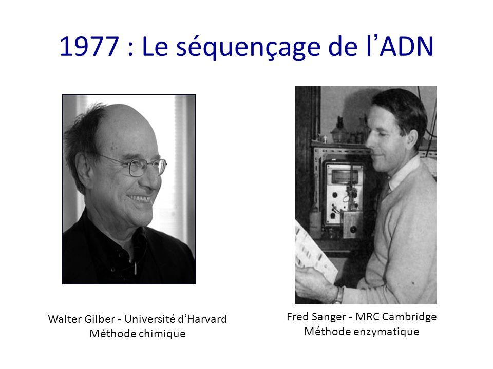 1977 : Le séquençage de l ' ADN Walter Gilber - Université d ' Harvard Méthode chimique Fred Sanger - MRC Cambridge Méthode enzymatique