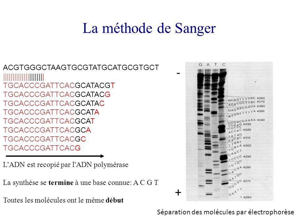 La méthode de Sanger ACGTGGGCTAAGTGCGTATGCATGCGTGCT |||||||||||||||||||||| TGCACCCGATTCACGCATACGT TGCACCCGATTCACGCATACG TGCACCCGATTCACGCATAC TGCACCCGA