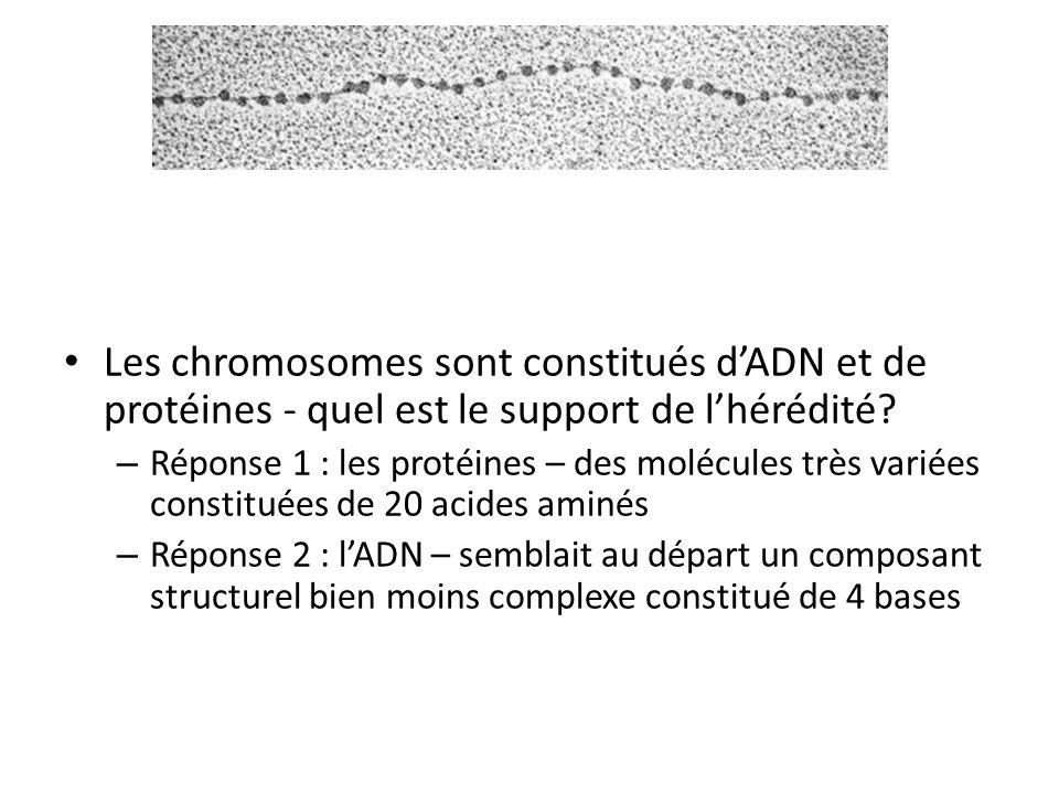 Les chromosomes sont constitués d'ADN et de protéines - quel est le support de l'hérédité? – Réponse 1 : les protéines – des molécules très variées co
