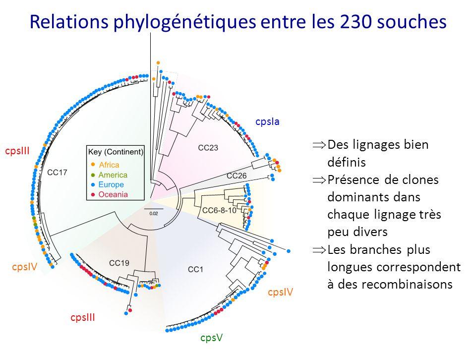 Relations phylogénétiques entre les 230 souches cpsIII cpsIV cpsIII cpsV cpsIa cpsIV  Des lignages bien définis  Présence de clones dominants dans c