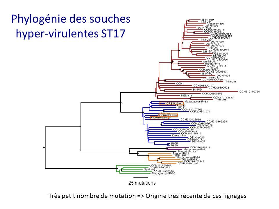 25 mutations Phylogénie des souches hyper-virulentes ST17 Très petit nombre de mutation => Origine très récente de ces lignages