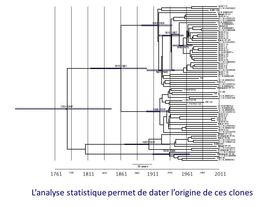 176118111861191119612011 L'analyse statistique permet de dater l'origine de ces clones