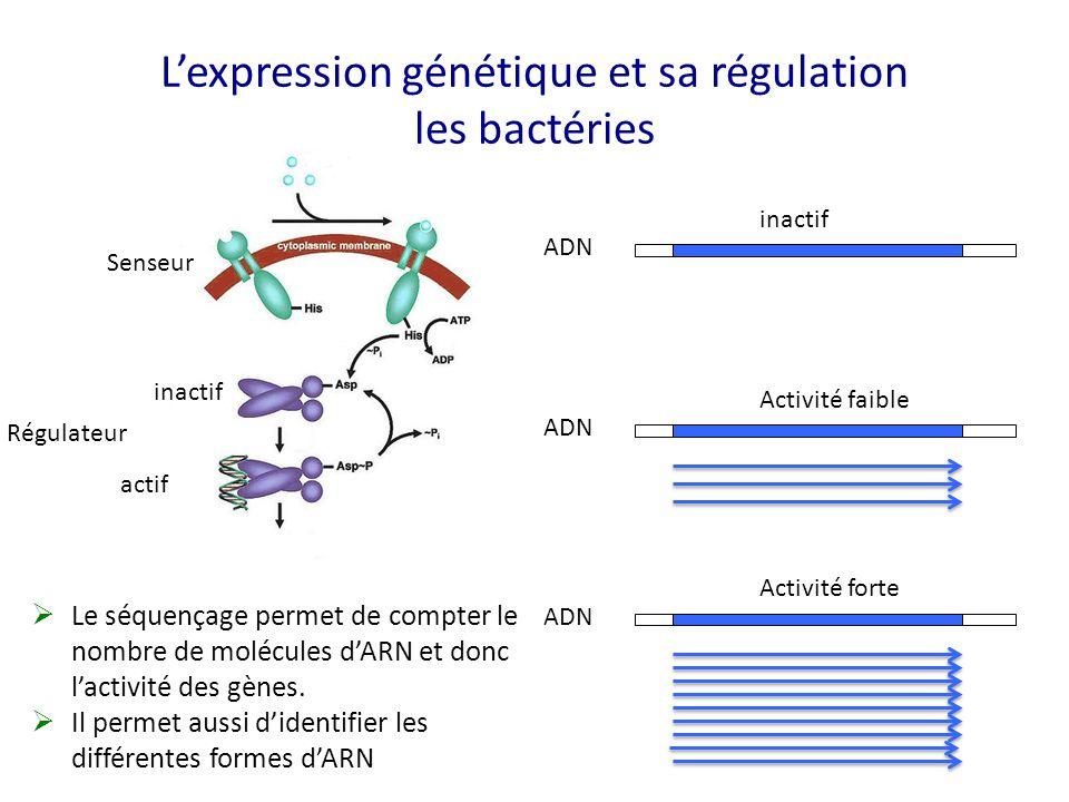 L'expression génétique et sa régulation les bactéries Senseur Régulateur inactif actif ADN inactif ADN Activité faible ADN Activité forte  Le séquenç