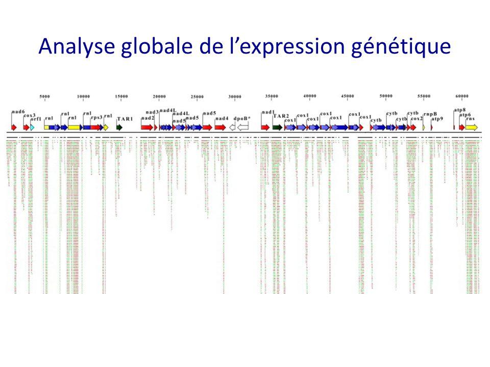 Analyse globale de l'expression génétique