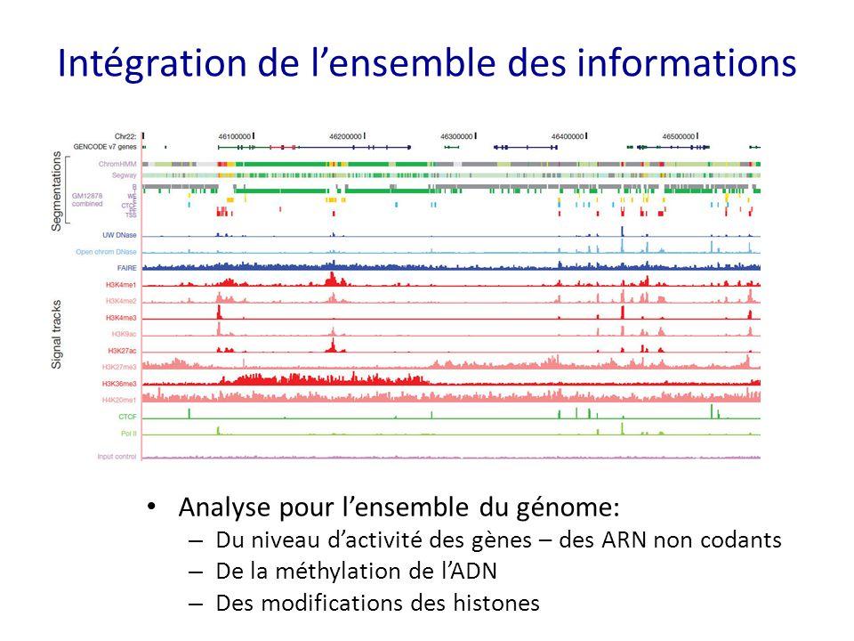 Intégration de l'ensemble des informations Analyse pour l'ensemble du génome: – Du niveau d'activité des gènes – des ARN non codants – De la méthylati