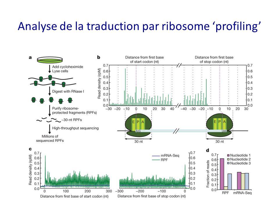 Analyse de la traduction par ribosome 'profiling'