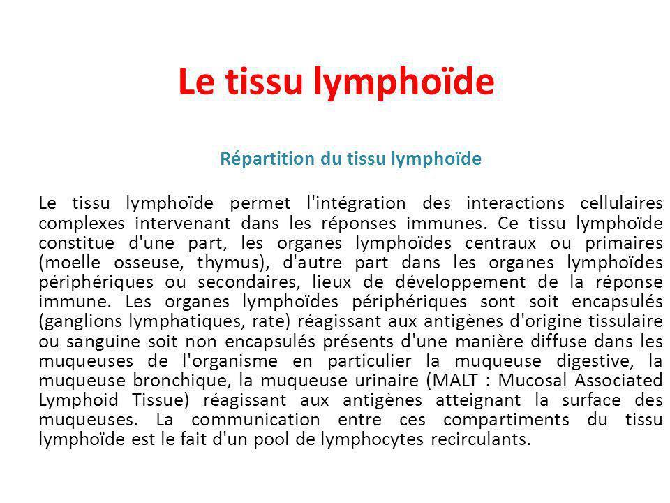 Le tissu lymphoïde Répartition du tissu lymphoïde Le tissu lymphoïde permet l intégration des interactions cellulaires complexes intervenant dans les réponses immunes.