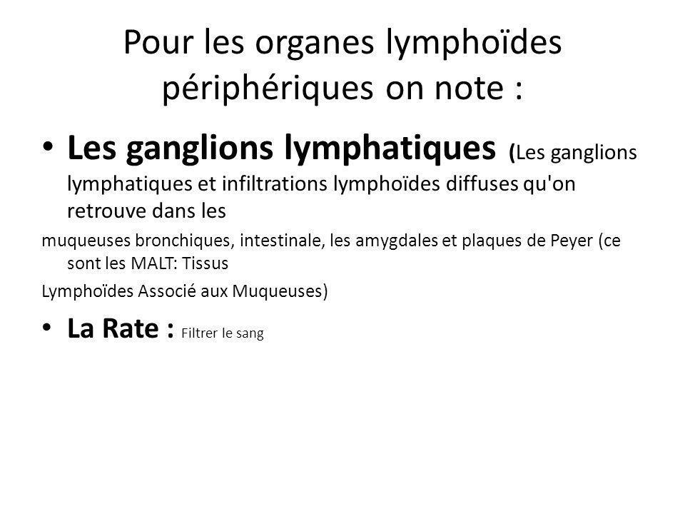 Pour les organes lymphoïdes périphériques on note : Les ganglions lymphatiques (Les ganglions lymphatiques et infiltrations lymphoïdes diffuses qu on retrouve dans les muqueuses bronchiques, intestinale, les amygdales et plaques de Peyer (ce sont les MALT: Tissus Lymphoïdes Associé aux Muqueuses) La Rate : Filtrer le sang