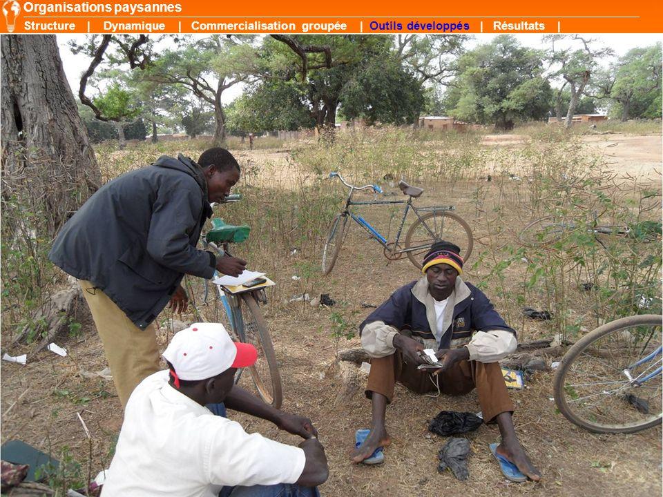 12 Organisations paysannes Structure | Dynamique | Commercialisation groupée | Outils développés | Résultats |