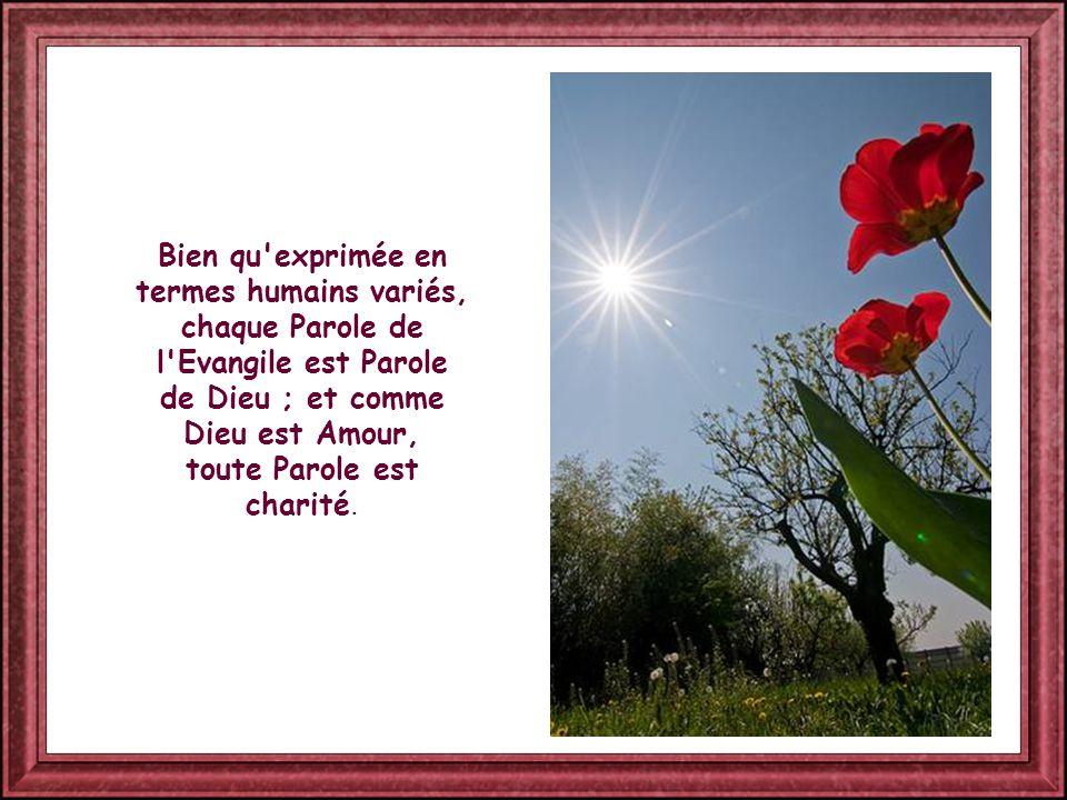 Et une Parole résume toutes les autres : aimer, aimer Dieu et le prochain. En elle Jésus résume « toute la Loi et les Prophètes » (cf Mt 22,40).