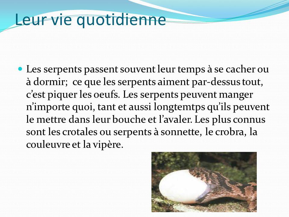 La nourriture des serpents Les serpents se nourrissent de grenouilles, de crapauds et de poissons.