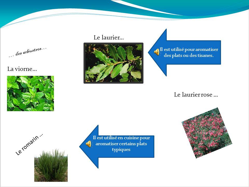 … des arbustres… La viorne… Le laurier… Il est utilisé pour aromatiser des plats ou des tisanes. Le romarin … Il est utilisé en cuisine pour aromatise