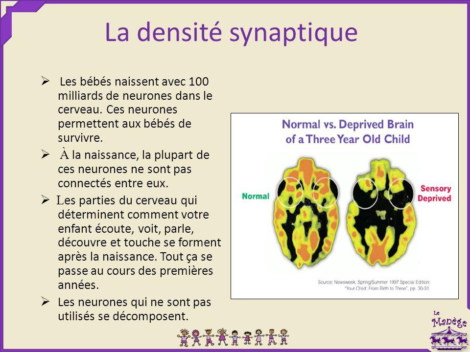 La densité synaptique  Les bébés naissent avec 100 milliards de neurones dans le cerveau. Ces neurones permettent aux bébés de survivre.  À la naiss