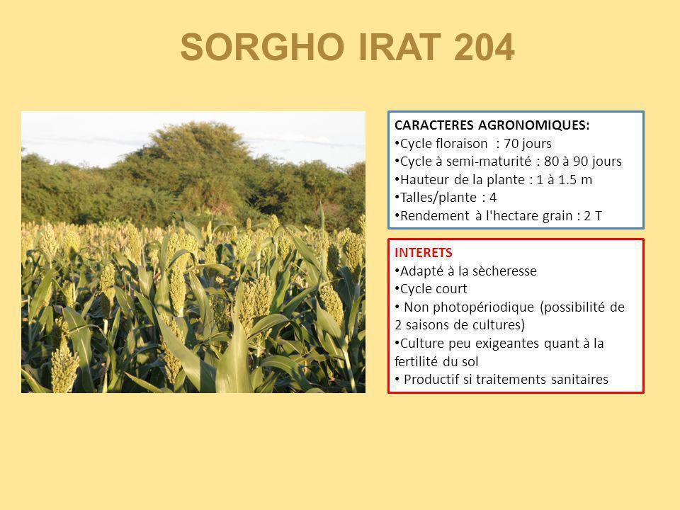 CARACTERES AGRONOMIQUES: Cycle floraison : 70 jours Cycle à semi-maturité : 80 à 90 jours Hauteur de la plante : 1 à 1.5 m Talles/plante : 4 Rendement