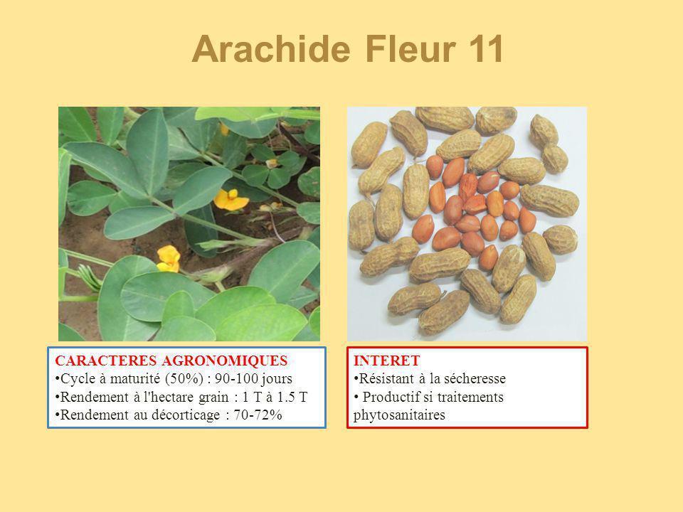 Arachide Fleur 11 CARACTERES AGRONOMIQUES Cycle à maturité (50%) : 90-100 jours Rendement à l'hectare grain : 1 T à 1.5 T Rendement au décorticage : 7