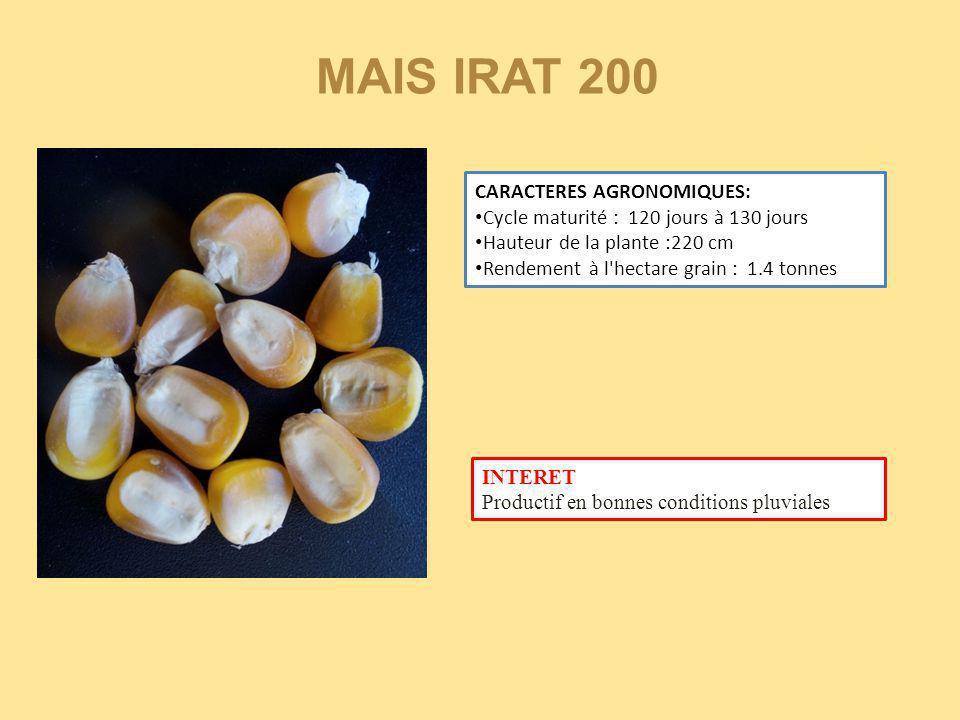 MAIS IRAT 200 CARACTERES AGRONOMIQUES: Cycle maturité : 120 jours à 130 jours Hauteur de la plante :220 cm Rendement à l'hectare grain : 1.4 tonnes IN