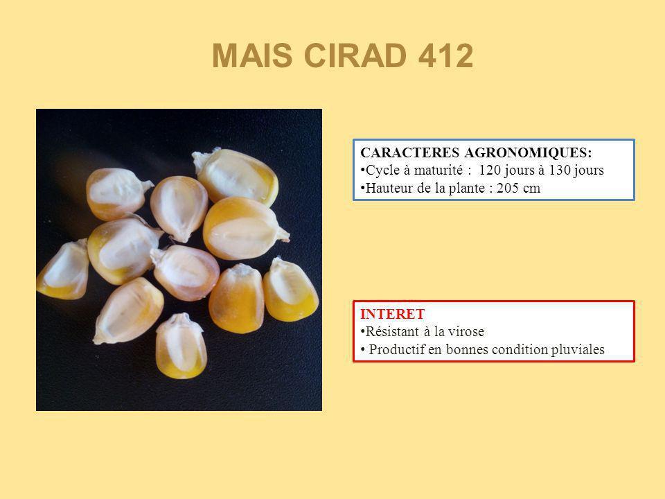MAIS CIRAD 412 CARACTERES AGRONOMIQUES: Cycle à maturité : 120 jours à 130 jours Hauteur de la plante : 205 cm INTERET Résistant à la virose Productif