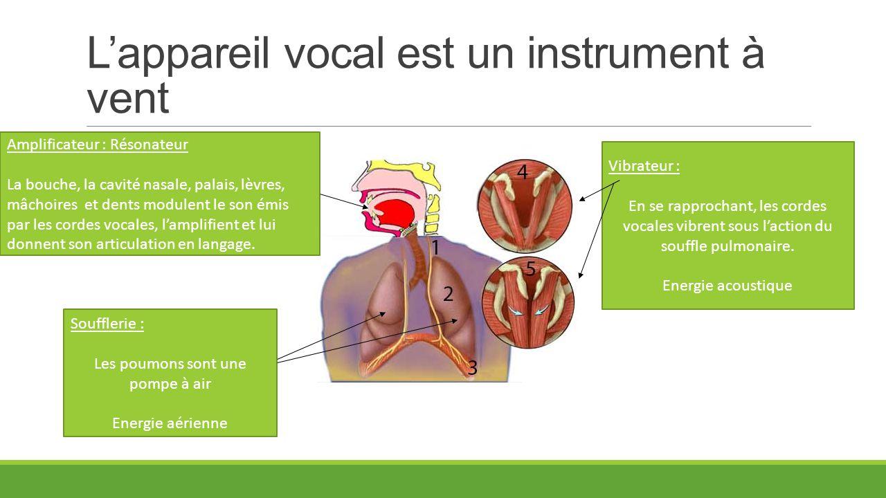 L'appareil vocal est un instrument à vent Soufflerie : Les poumons sont une pompe à air Energie aérienne Vibrateur : En se rapprochant, les cordes voc