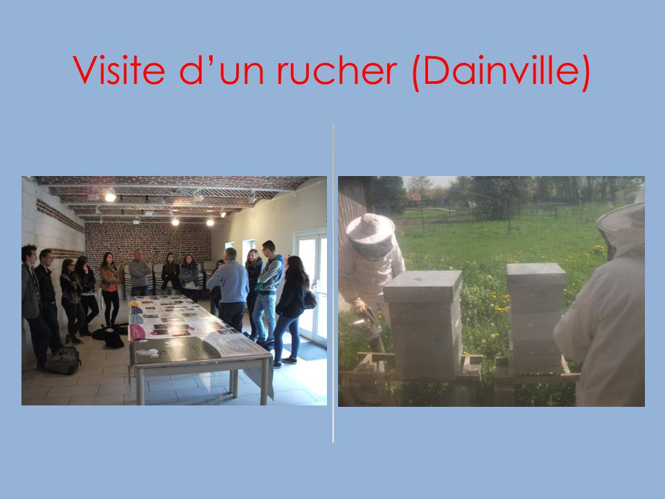 Visite d'un rucher (Dainville)