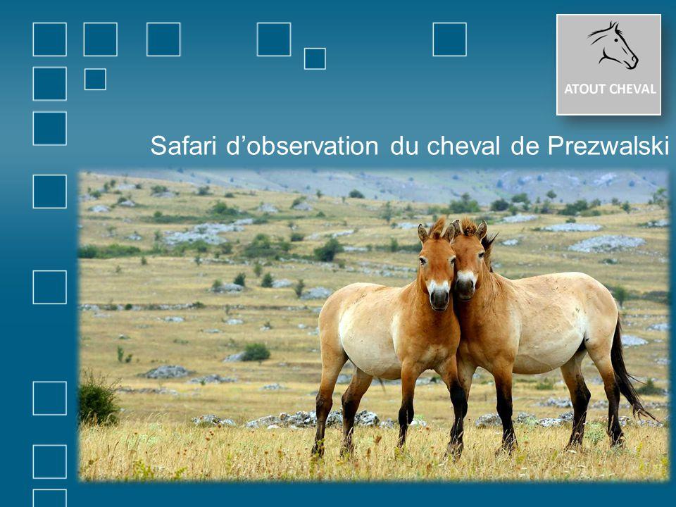 Safari d'observation du cheval de Prezwalski