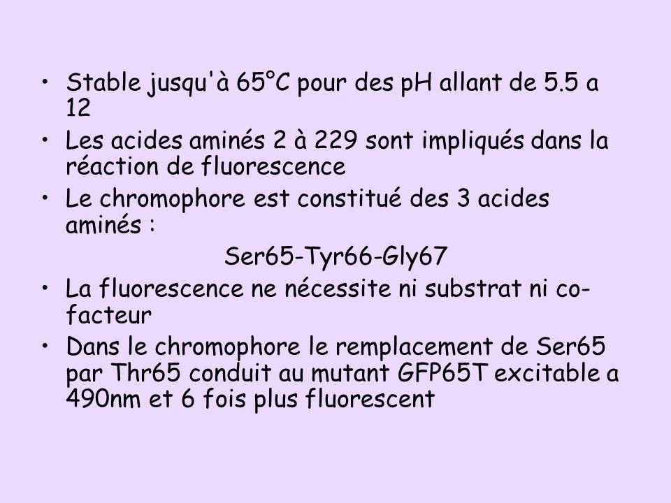 Stable jusqu'à 65°C pour des pH allant de 5.5 a 12 Les acides aminés 2 à 229 sont impliqués dans la réaction de fluorescence Le chromophore est consti