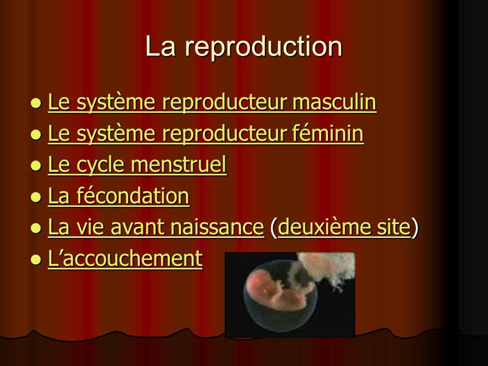 La reproduction Le système reproducteur masculin Le système reproducteur masculin Le système reproducteur masculin Le système reproducteur masculin Le